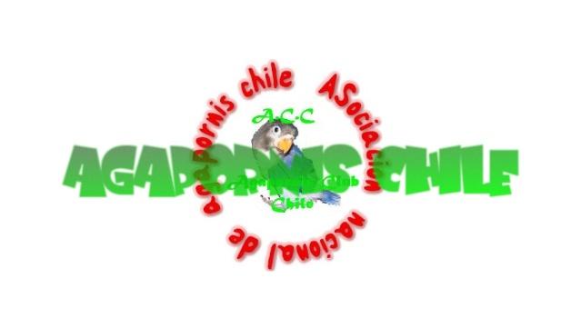 AGAPORNIS CHILE